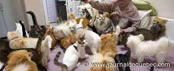 La femme aux 500 chats