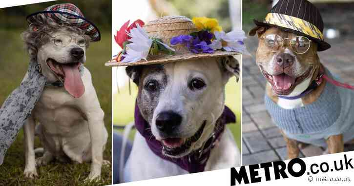 Animal shelter dresses dogs as old people to help them get adopted