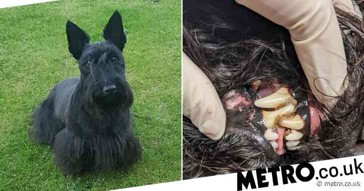 Dog gets mouth glued together after trying to open parcel