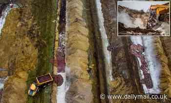 Denmark coronavirus: Decomposing minks swell and 'rise from graves'