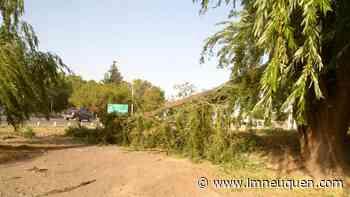 Por el fuerte viento se le cayó una pesada rama encima: está grave - LM Neuquén