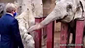 """¿Qué dirá Máxima? El fuerte episodio entre el Rey de Holanda y un elefante """"toquetón"""" - MDZ Online"""