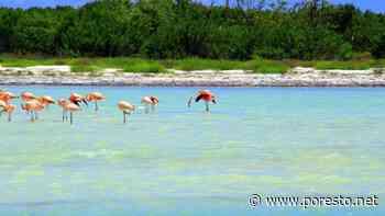 Holbox, Cozumel y Tulum se llevan premios en los World Travel Awards - PorEsto