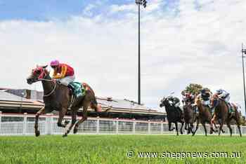 Patience the key for Echuca's Johnstone racing stable - Shepparton News