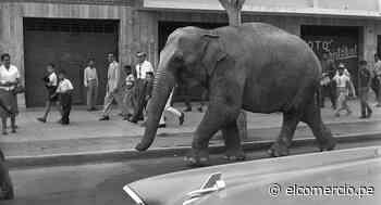 Elefanta Mary Jumbo cruzó Lima Cercado Barranco 1959 | nnsp | ARCHIVO-ELCOMERCIO - El Comercio Perú