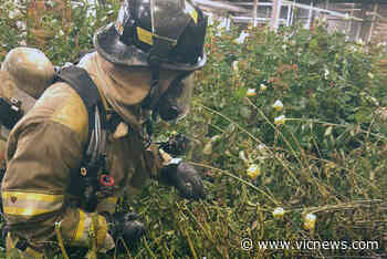 Small fire extinguished at Brentwood Bay flower farm – Victoria News - Victoria News