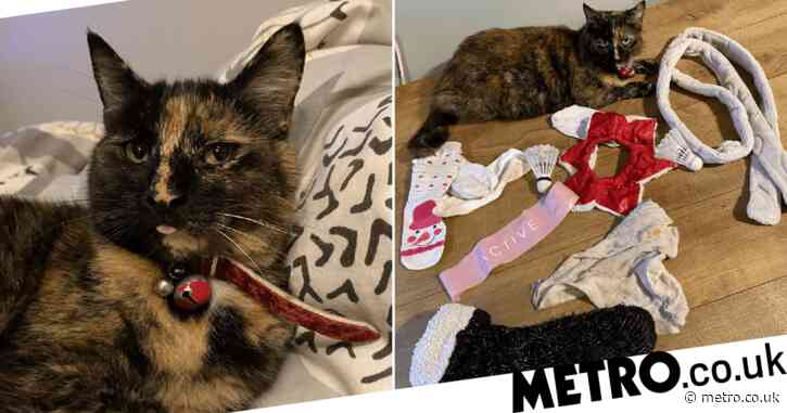 Naughty cat won't stop bringing home strangers' underwear