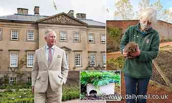 His Royal Spine-ness! Prince Charles adopts three baby HEDGEHOGS