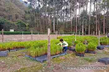 Donan más de 9 mil plantones a asociaciones de Oxapampa para reforestar áreas degradadas - Expreso (Perú)