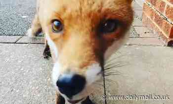 Man is stunned to get friendly greeting from the local FOX when he moves into his new flat