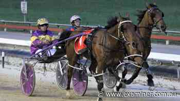 Smart pacer Lip Reader heading to Devonport to prepare for summer feature races - Tasmania Examiner