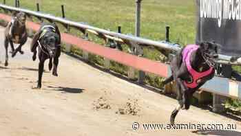 Lone North West runner Wynburn Sheean blitzes rivals in Devonport Chase final - Tasmania Examiner