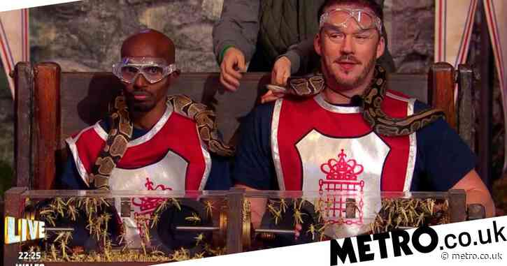 I'm A Celebrity 2020: Show hit with 540 complaints over animal welfare as RSPCA urge viewers to contact Ofcom