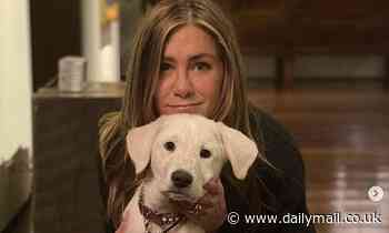 Jennifer Aniston plays with her new dog Lord Chesterfield while at home on Thanksgiving