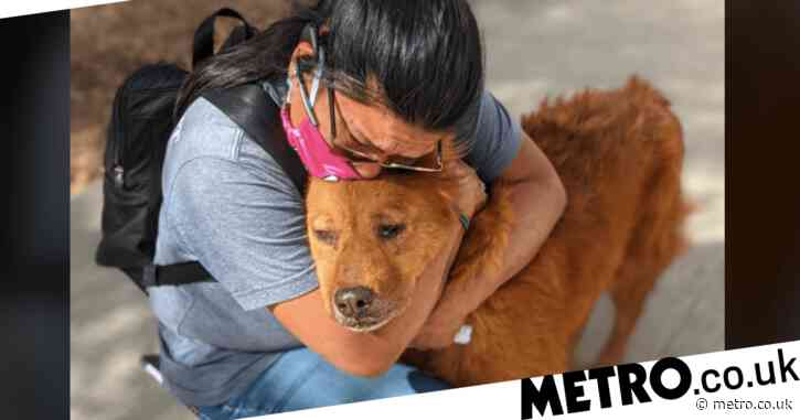Lost dog's face says it all as he's reunited with owner after 7 years on streets