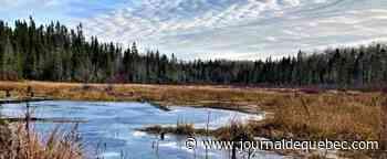 Le ministère de la Forêt lutte contre les aires protégées, selon les environnementalistes