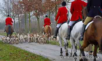 Trail hunting suspended amid claims it's a front for chasing foxes