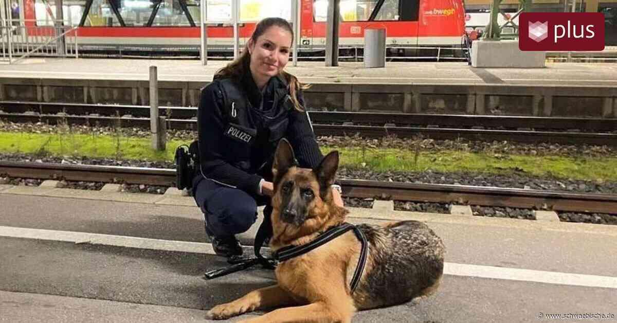 Zug nach Friedrichshafen: Herrenlose Schäferhündin gefunden - Schwäbische