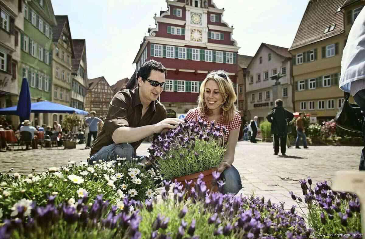 Kritik an geringer Kauflaune: Wechseln die Gartentage auf die Burg? - esslinger-zeitung.de