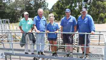 Weaners top 486c/kg at solid Boyanup sale