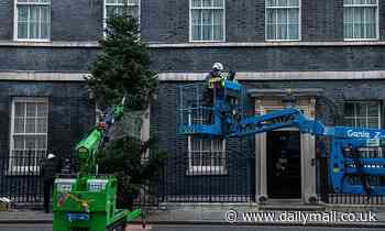 Downing Street puts up traditional Christmas tree outside No10