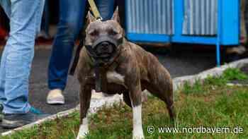 Schwarzenbruck erhöht Steuer für Kampfhunde - Nordbayern.de