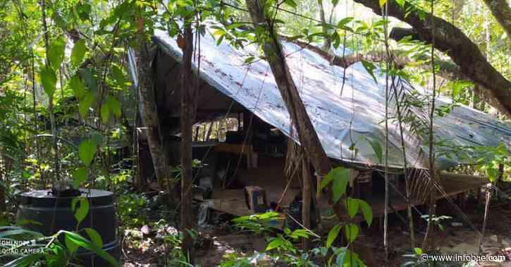 Desmantelan laboratorios de cocaína del ELN en Tibú, Norte de Santander - infobae