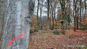 Kleve: Kranken Baume in Reichswalde müssen gefällt werden - NRZ