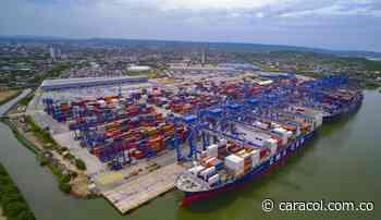 Exportan ñame de El Carmen de Bolívar a países europeos - Caracol Radio