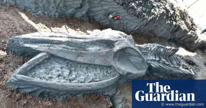 Ancient whale skeleton found in Thailand holds clues to climate change