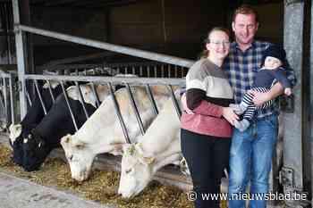 Zowel de koe als hun voedsel zelf gekweekt, dus krijgt boerderij label '100% West-Vlaams' voor rundsvlees