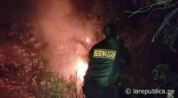 Tacna: vecinos y serenos lograron apagar incendio forestal en Tarata - LaRepública.pe
