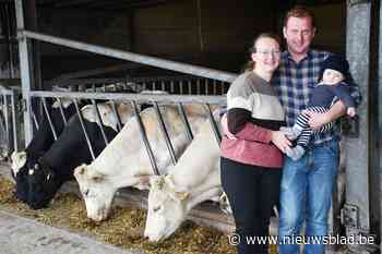 Zowel de koe als hun voedsel zelf gekweekt, dus krijgt boerderij label '100% West-Vlaams' voor rundsvlees - Het Nieuwsblad