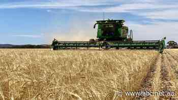 Australia prepares to escalate action against China to WTO over barley tariffs