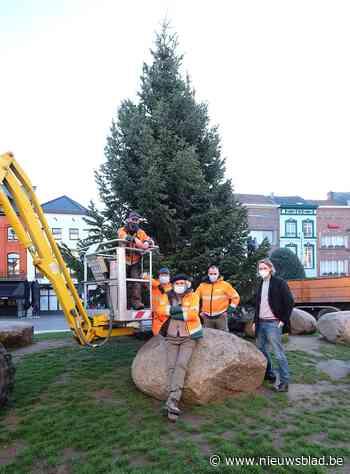Kaukasische kerstboom van twaalf meter siert Grote Markt - Het Nieuwsblad