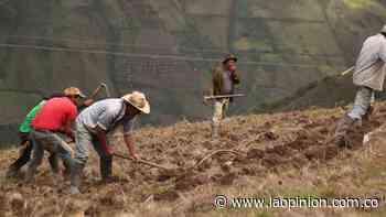 Cácota le apuesta a los cultivos tradicionales - La Opinión Cúcuta