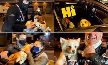 Another 45 dogs rescued from China's meat trade arrive at JFK Airport to meet their new owners