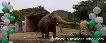 L'éléphant maltraité du Pakistan va être transféré en avion au Cambodge