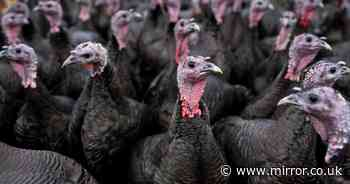 At least 10,000 turkeys to be slaughtered as bird flu confirmed on UK farm