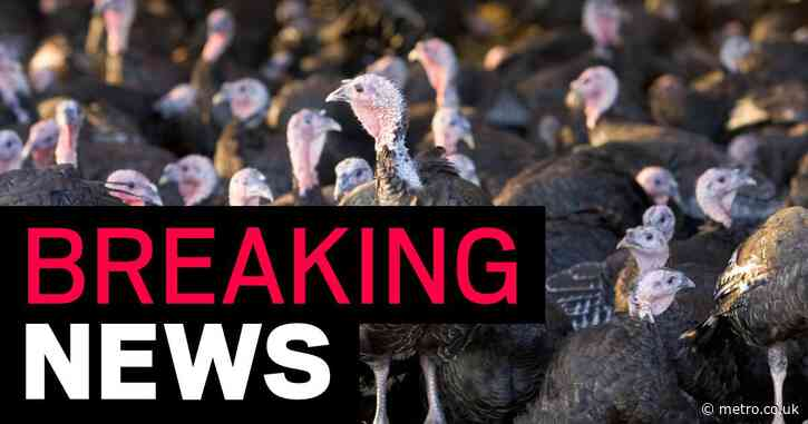 More than 10,000 turkeys to be culled after bird flu outbreak on UK farm