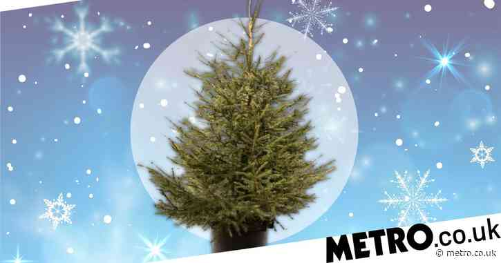 How to rent a Christmas tree for a more eco-friendly option
