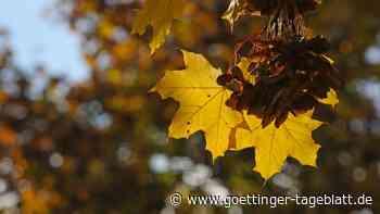 Vorläufige Bilanz zum Herbstwetter: Wenig Regen und zu warm