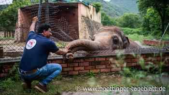 """Der """"einsamster Elefant der Welt"""" bekommt ein neues Zuhause"""