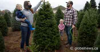 First toilet paper, now Christmas trees? Coronavirus sparks potential new shortages - Global News