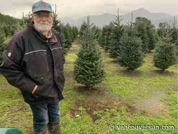 O Christmas trees! With pandemic, some people are feeling the seasonal spirit earlier