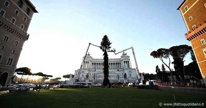 """Roma, in piazza Venezia torna """"Spelacchio"""". Raggi: """"Abbiamo deciso di non rinunciare all'albero per dare un messaggio di speranza"""""""