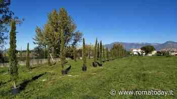 Villanova di Guidonia: piantati 62 nuovi alberi al parco