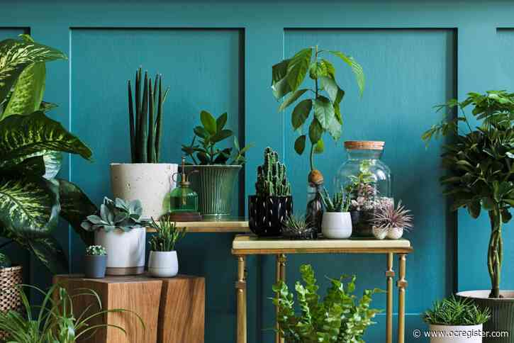 5 tips for taking care of your houseplants and patio plants during the winter