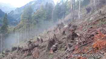Bad Hindelang: Waldschäden durch den Föhnsturm im Vorjahr sind »repariert« - Kreisbote