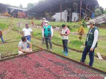 Lanzan ruta agroturística del cacao en Chazuta-SM - DIARIO AHORA